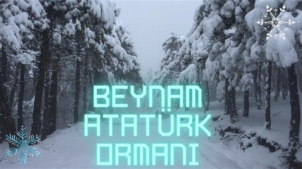 beynam ormanlari